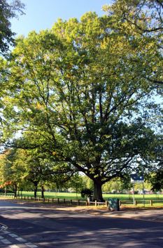 Spencer Park tree